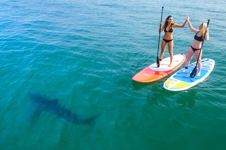 Drone Photos Great White Shark