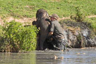 Man Saves Drowning Baby Elephant