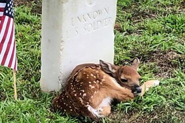 Fawn Unknown Soldier Grave
