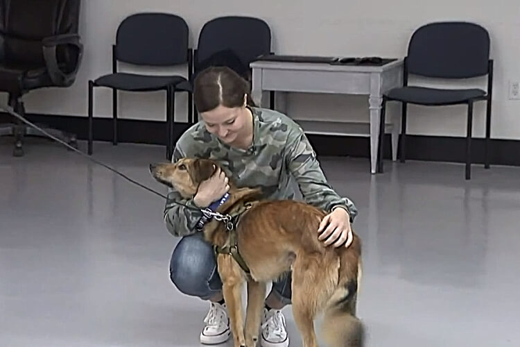 Soldier Reunites Home With Dog She Met Serving Overseas